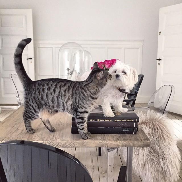 Pet Friendly Home Decor: 17 Best Images About Anika Von Holdt On Pinterest