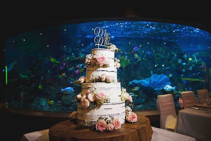 "Samantha Moody Photography 📷 on Instagram: ""What an amazing creation @sugarlacecakesmelbourne 😍 🍰🐠 #samanthamoodyphotography #aquariumwedding #cake #weddingcake #sealifeaquarium"""