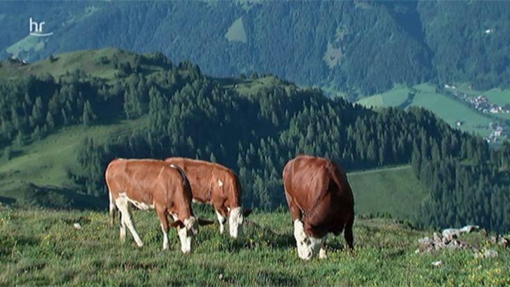 Die Kitzbüheler Alpen in Tirol zählen zu den schönsten Urlaubsregionen Österreichs. Inmitten sanfter Grasberge und am Fuß des berühmten Hahnenkamms liegt die renommierte Sportstadt Kitzbühel, ...