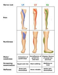 22 best images about Musculoskeletal Illustration on ...