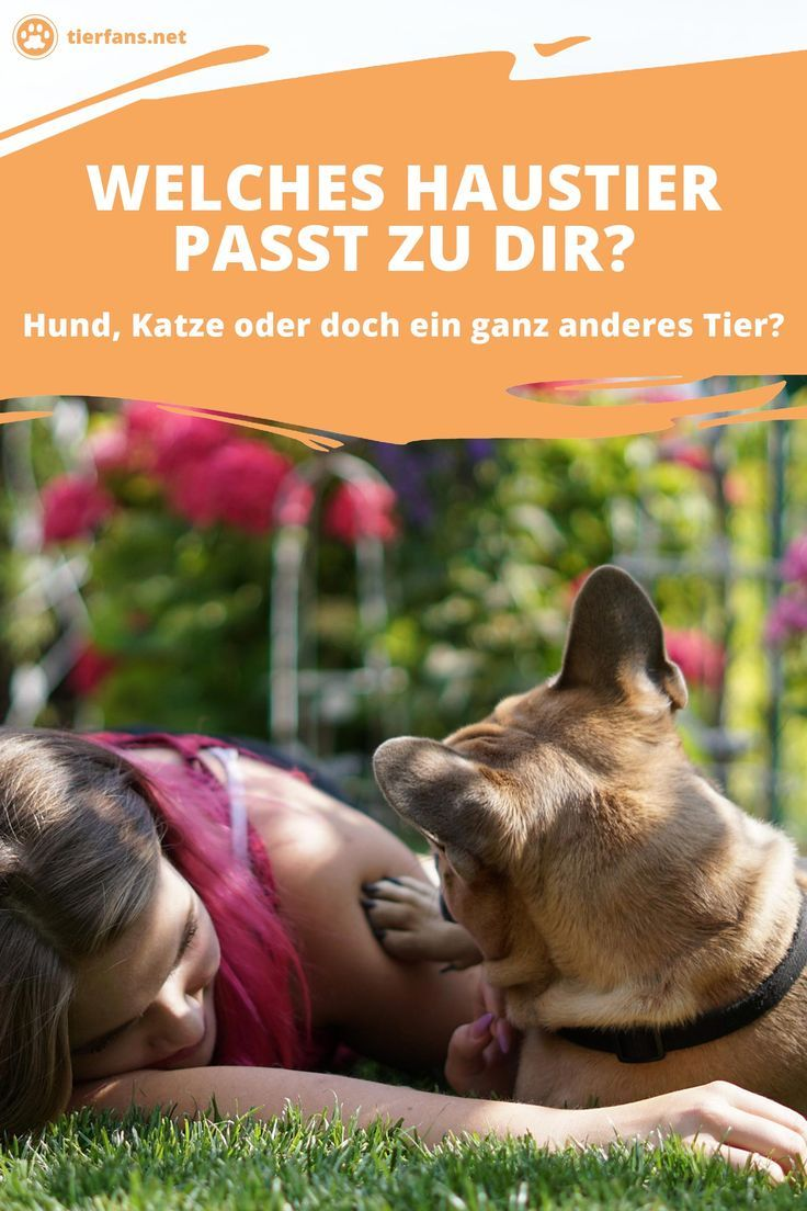 Welches Haustier Passt Zu Dir Haustiere Tier Fakten Tiere