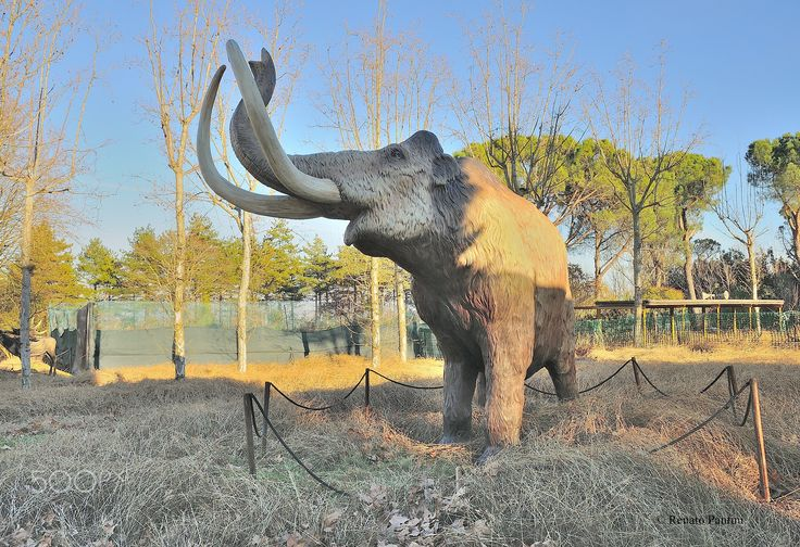 Mammuthus primigenius. - A reconstruction, scale 1: 1, of the woolly mammoth. Taken in Chianciano Terme, (Toscana, Italia) (January 2017)