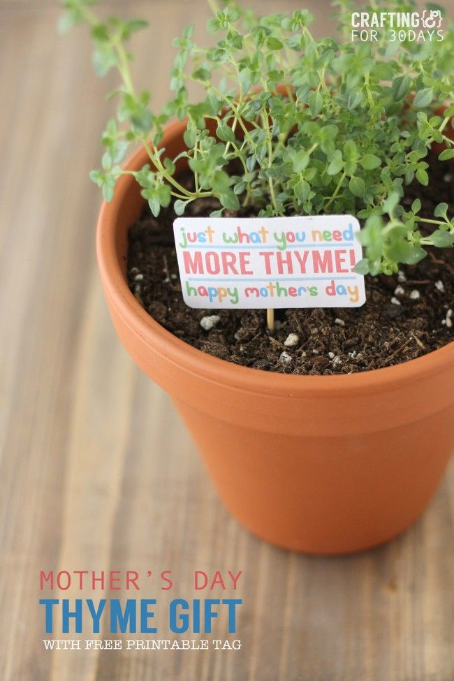 """Just in """"thyme"""" Mother's Day gift idea. Funny gift tag for a pot of herbs. Cute mother's day gift."""