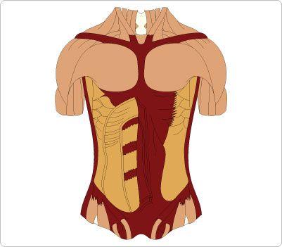 Body Chest Clip Art