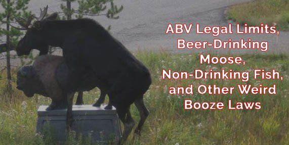 Beer ABV Legal Limits and other Weird Liquor Laws #beer #craftbeer #party #beerporn #instabeer #beerstagram #beergeek #beergasm #drinklocal #beertography