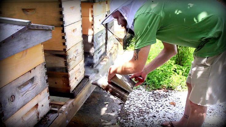 Beekeeping: Using A Bee Smoker