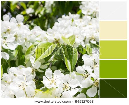 Pallete of colors. White pear blossoms. Close up. Harmonious combination of colors. Color mixing.