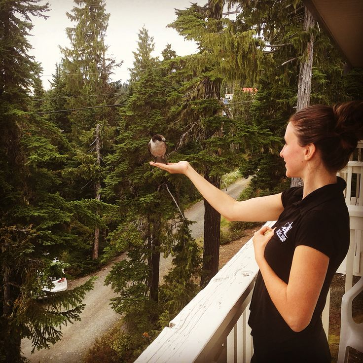 Bird feeding in Mount Washington ❤️ They eat right from your hands ❤️