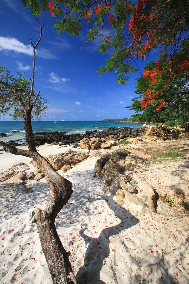 Shading branches on the beach, Samed Island, Rayong - Thailand