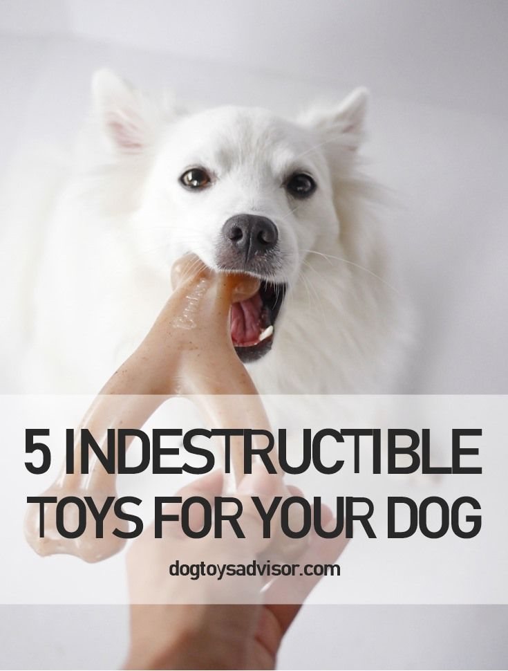 Are You Tired Of Buying New Toys For Your Dog If You Re Looking