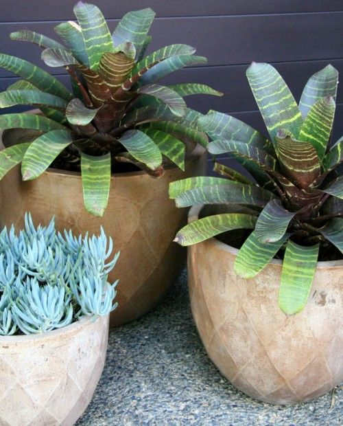 Bali Planter | Garden Expressions | Landscape Design for Residential, Commercial and Pools - Coffs Harbour