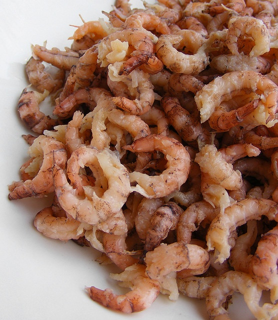 Hollandse garnalen (Dutch shrimps)