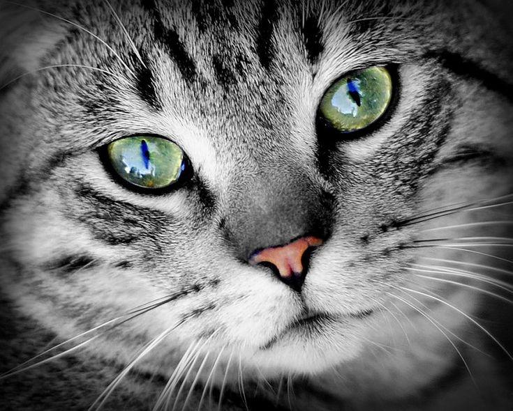 Macska, mint erőállat