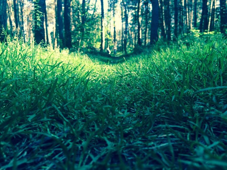Green Path Through The Woods