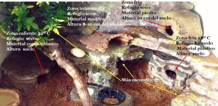 Resultado de imagen de terrario gecko leopardo