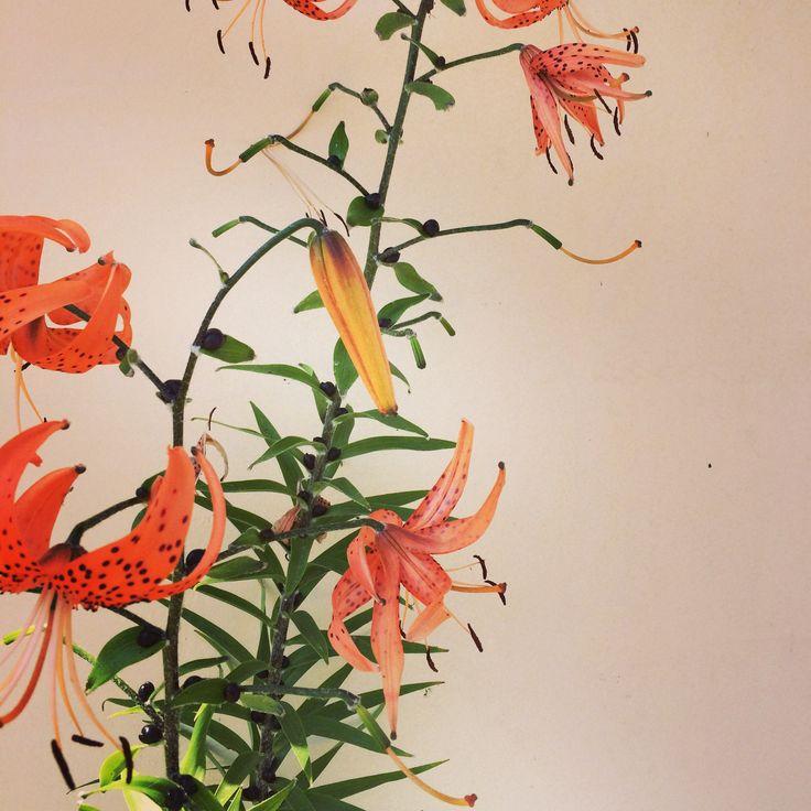 외할머니댁에 핀 이름 모를 꽃!  마치 수채화로 그려 놓은거 같아..