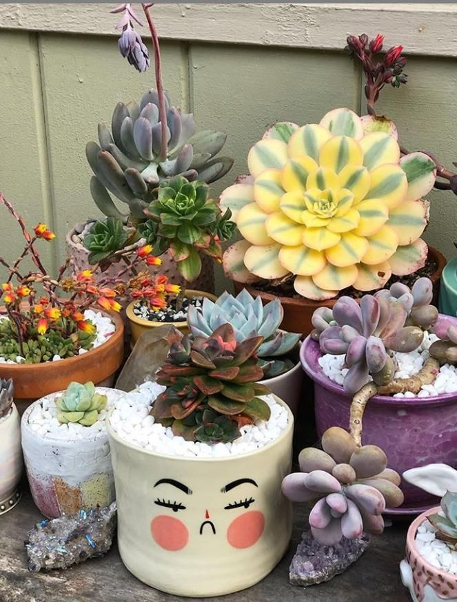 34 Beautiful Indoor Succulents Decoration And Care Ideas Latest Fashion Trends For Woman In 2020 Succulents Succulents Indoor Succulents Decor