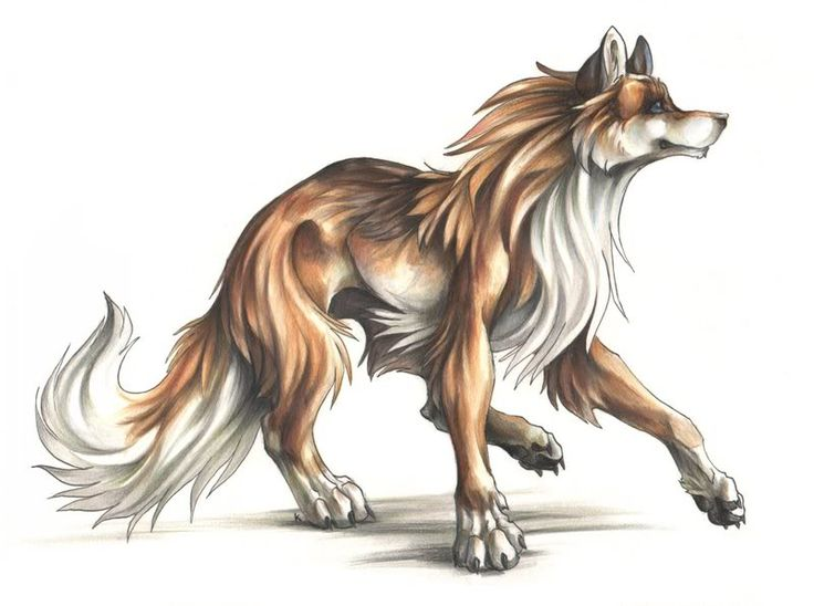 Best 20 anime wolf ideas on pinterest - Wolf girl anime pictures ...