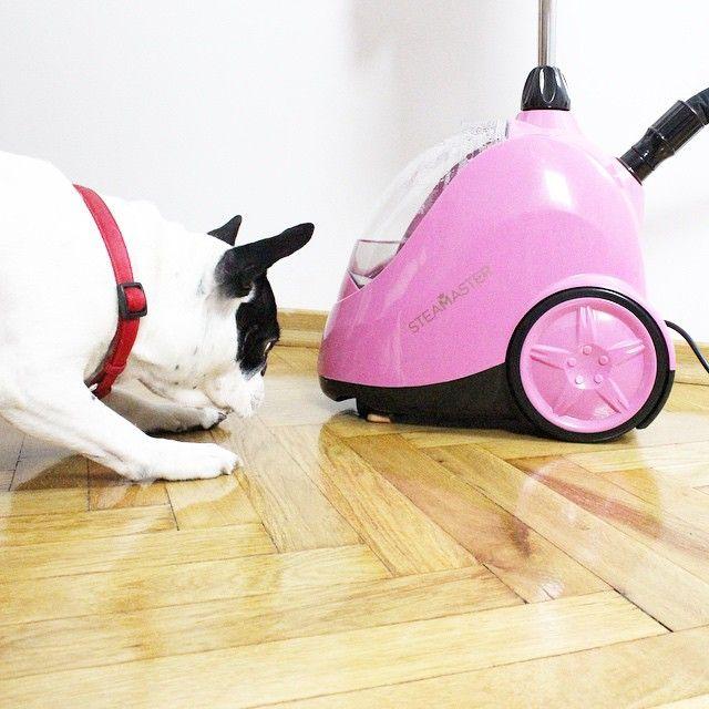 Hello little pink friend  @steamaster  #yeahbunny #steamaster #bimberfrancusky #frenchie #work #youbetterworkb***