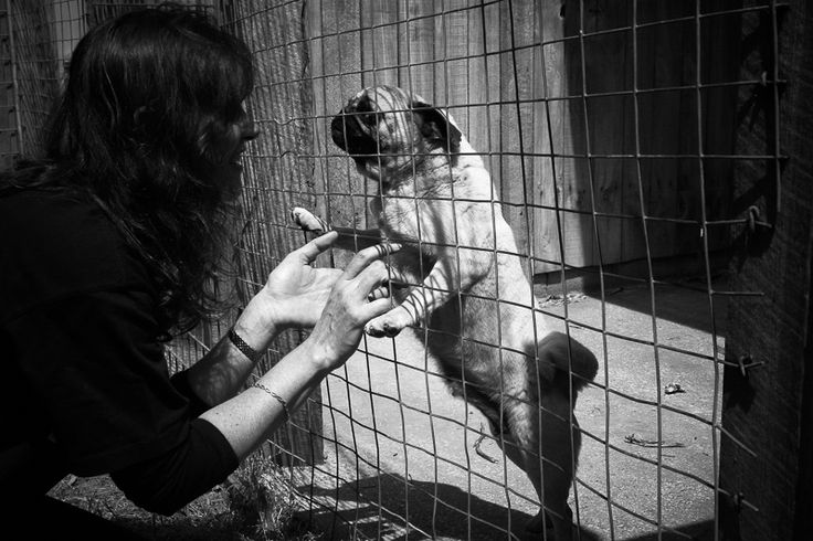 The Fight Against Puppy Farming http://www.thepugdiary.com/fight-puppy-farming/