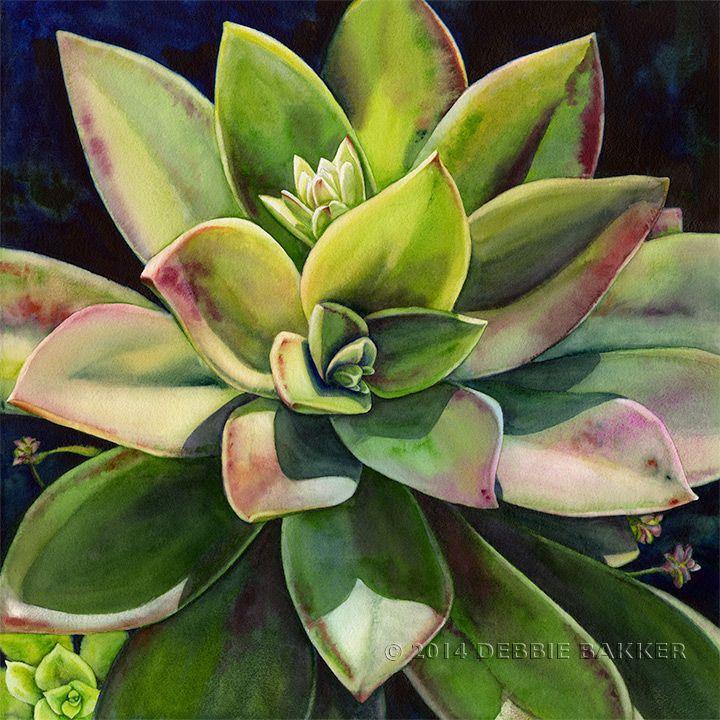 DEBBIE BAKKERwatercolor succulent