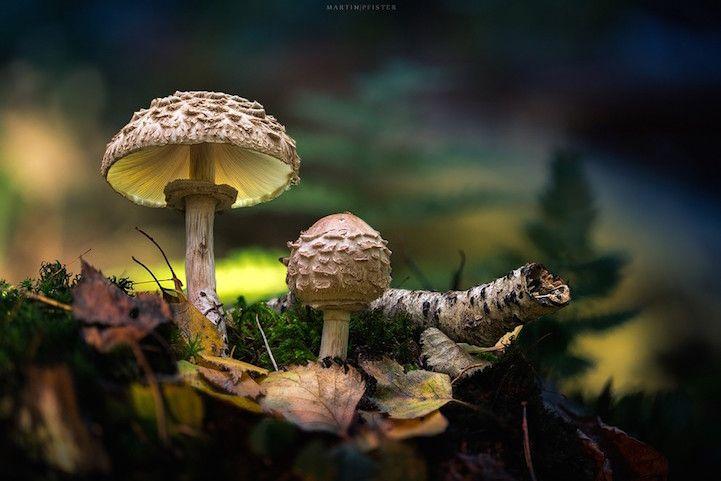 http://www.mymodernmet.com/profiles/blogs/martin-pfister-macro-mushroom-photos
