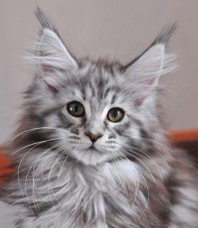 Katze Le