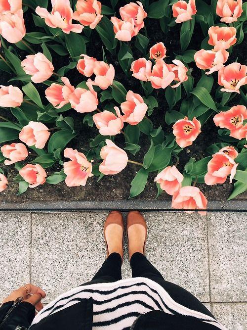 Frühlingsanfang // Spaziergang mit Blumen