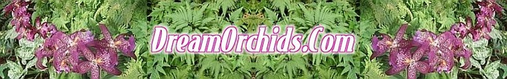 contains recipes for the different potting mixtures for orchids