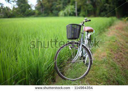 bicycle in rice paddy outdoor, asia -Thailand