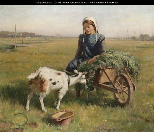 778 Best Goat Farm Images On Pinterest: 93 Best Images About DUTCH GOATS On Pinterest
