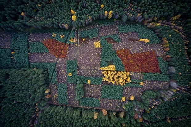Kacper Kowalski new book Side Effects:  A view over a forest with trees changing colour in Autumn.