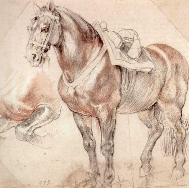 Etude of horse, 1619-1620  Peter Paul Rubens