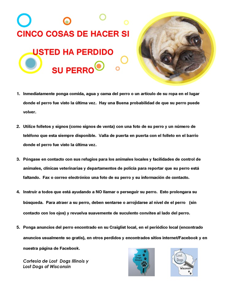 5 Things To Do If You Have Lost a Dog in Spanish http