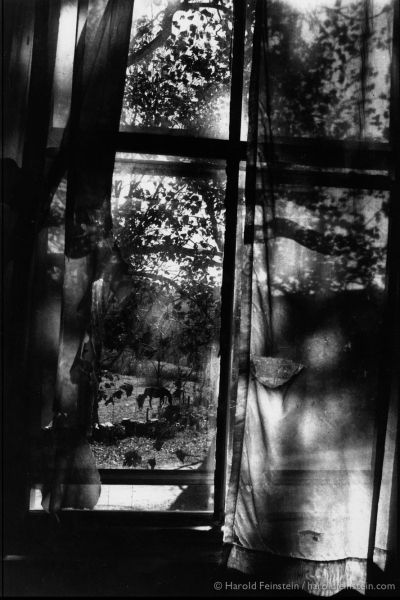 Harold Feinstein, Horses Through Curtained window, 1977