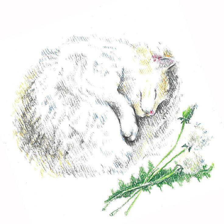 white cat, sleep, flower, dandelion, сolour pencils, graphic, illustration, draw, белая кошка, кошка спит клубочком, одуванчик, графика, иллюстрация, цветные карандаши.