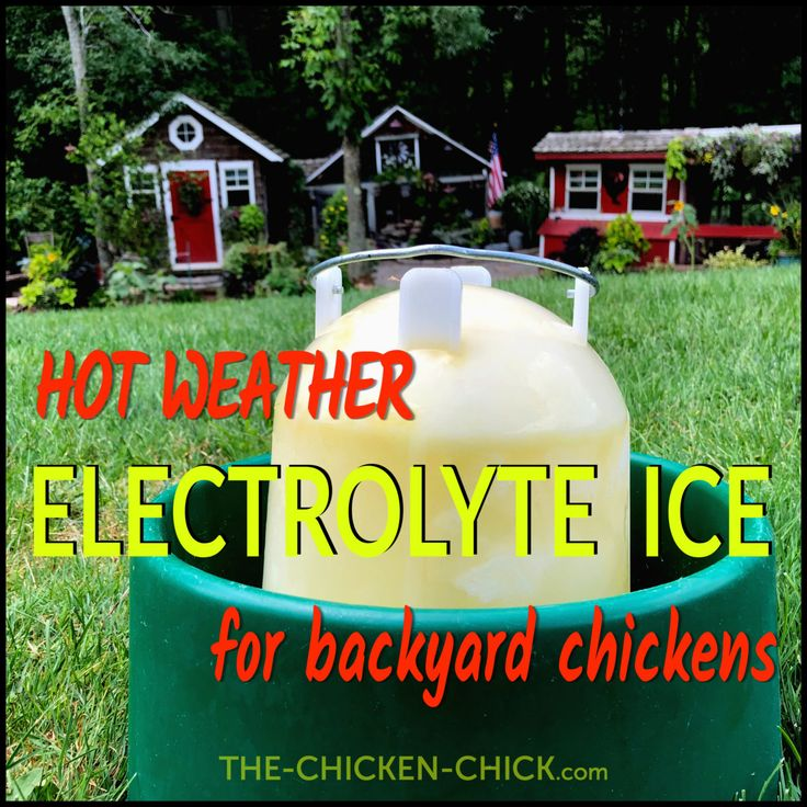 Chicken heat stress dehydration and homemade electrolyte