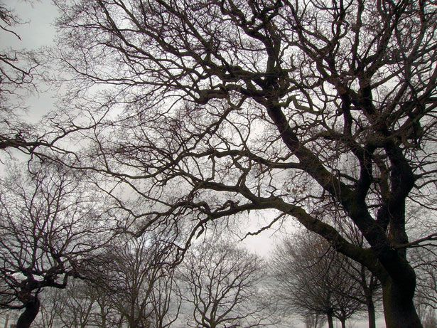 Best 25 Winter Trees Ideas On Pinterest: 59 Best Branches Images On Pinterest