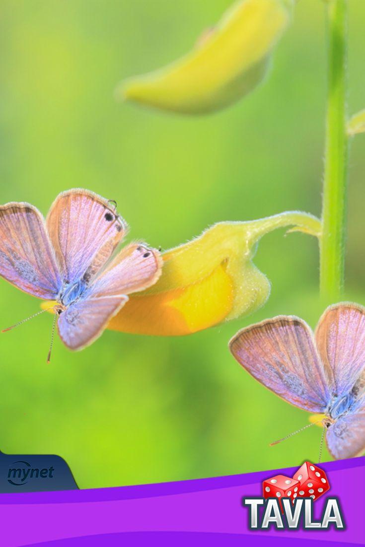 Bu güzel kelebekler size uğur getirsin #tavla ailesi!  https://goo.gl/ZAXKYa
