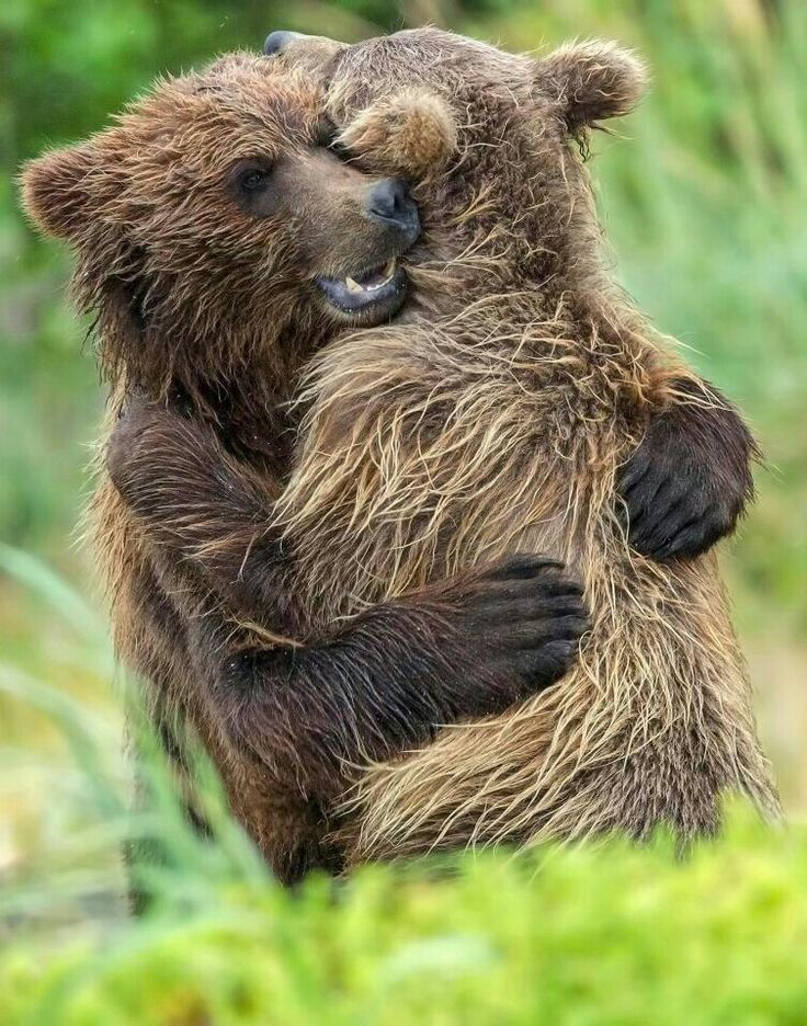 Bearhugs! More humans than ..... humans ♥️♥️♥️♥️♥️♥️♥️♥️♥️