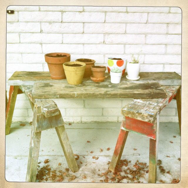Saw Horses Waiting for Spring .. spring bulbs  Using old saw horses and wooden planks as a table ...