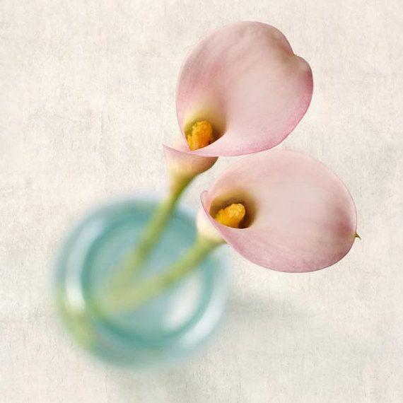 He encontrado este interesante anuncio de Etsy en https://www.etsy.com/es/listing/77433713/flower-photography-pink-calla-lily