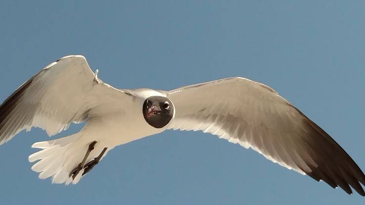 A seagull Janice captured a photo of in flight at Wrightsville Beach.
