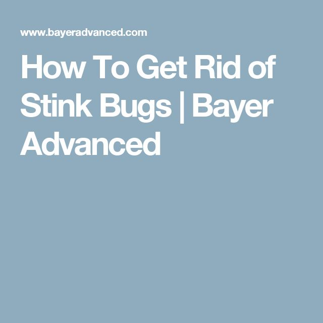 How To Get Rid of Stink Bugs | Bayer Advanced