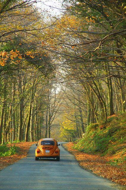 fall drive VW Beetle Orange