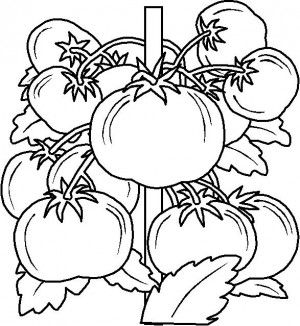 32 best Fruit coloring book images on Pinterest