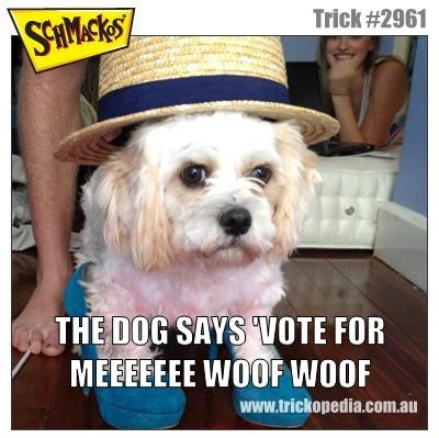 Is this Australia's most WACKO dog trick? Vote for this trick or check out more like it at Trickopedia.com.au.