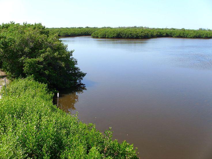 Lago no Refúgio Nacional da Vida Selvagem JN Ding Darling, na Ilha Sanibel, Flórida, USA.  Fotografia: Quadell.