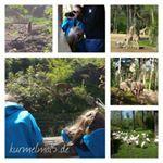 Heute gab es einen überraschenden Ausflug für die Mädchen. Es ging mit Oma und Opa im Gepäck nach Arnhem in den #BurgersZoo Ein wundervoller Ausflug! Ich habe NOCH NIE einen so unglaublich grandiosen Zoo gesehen. Die Mädels und wir Erwachsenen sind absolut begeistert!  #kurmelmal5  #Zoo #Ausflug #wib