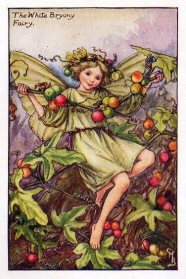 White Bryony Flower Fairy Vintage Print by Cicely Mary Barker. first published in London by Blackie, 1926 in Flower Fairies of the Autumn.